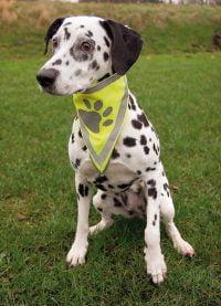 Reflex Scarf till hund