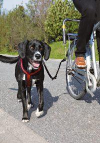 Cykelfäste för Hund